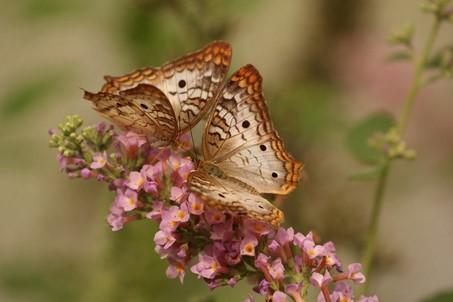 Bild für healing butterfly touch