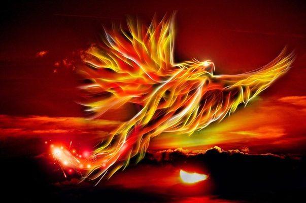 Bild für Healing phoenix journey